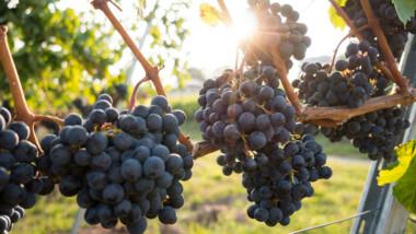 Giro (dei vini) d'Italia