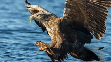 Oplev naturen helt tæt på med guidet ørnetur med et ophold på Rømø inkl. 2 nt., fiskebuffet og 3-retters menu